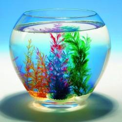 Coquillage corail magique