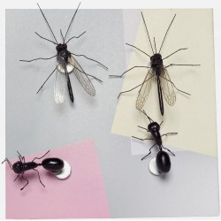 Boutique-Originale : Magnet - Insectes
